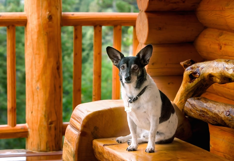 3 tips to prepare for your stay in our pet friendly cabins in the Gatlinburg Tn Pet Friendly Cabins