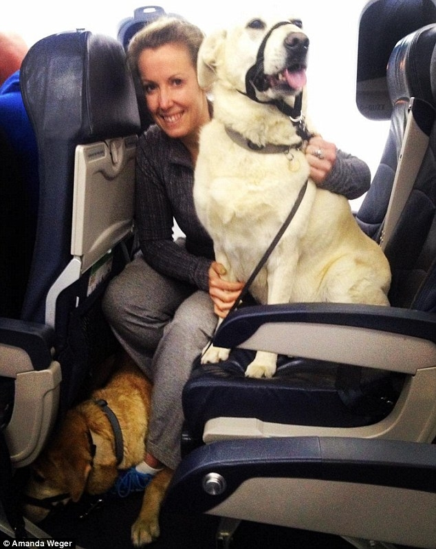 canadian airlines allow pets to fly in the cabin after ford mcmurray Airlines That Allow Dogs In Cabin