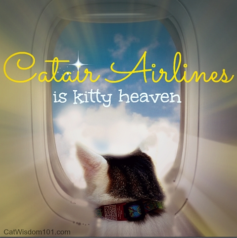 flying with cats air travel tips Flying With A Cat In Cabin