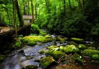 4 unexpected bonuses of staying at a secluded smoky mountain cabin Secluded Gatlinburg Cabins