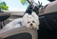 5 reasons to choose parksides pet friendly cabins in gatlinburg Gatlinburg Tn Cabins Pet Friendly