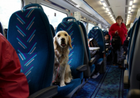 8 steps to take before flying with your dog the dog people Flying With A Dog In Cabin