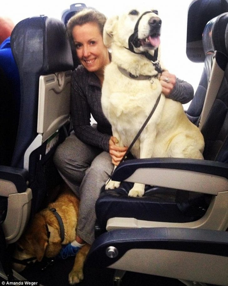 Permalink to Gorgeous Airlines That Allow Dogs In Cabin Ideas