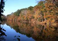 national forests and grasslands in texas angelina sam rayburn Angelina National Forest Cabins