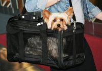 the 10 best dog carriers on amazon 2019 Flying With A Dog In Cabin