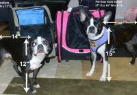 zoeys favorite pet carriers air travel on southwest airlines Airlines That Allow Dogs In Cabin
